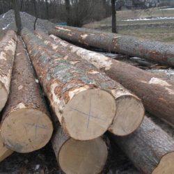 drewno lp