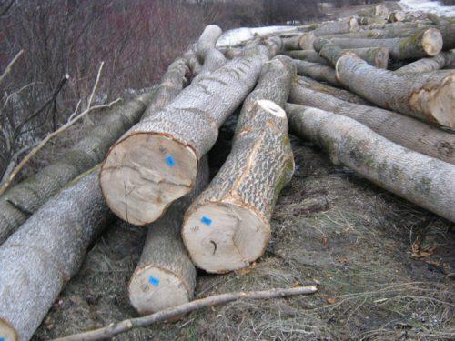 sprzedam drewno jesionowe � targ drzewny � gie�da