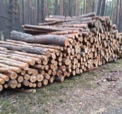 Kupie drewno lisciaste , iglaste Tagrze na pniu