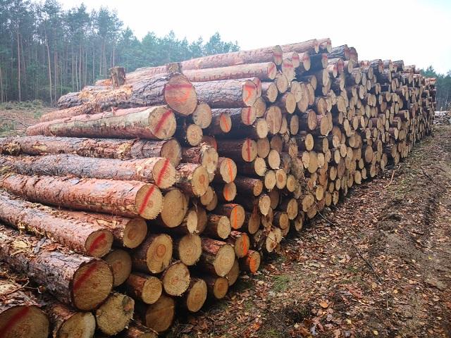 Drewno - paletowe 240