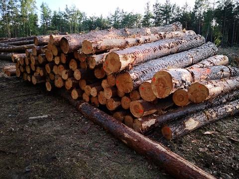 Drewno - kłody 4 m