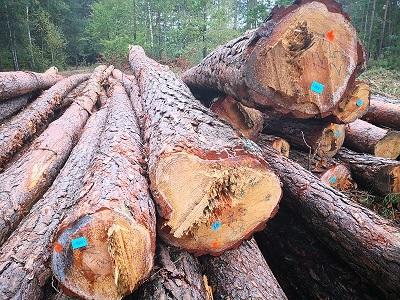 Drewno - dłużyce 8 - 14 m